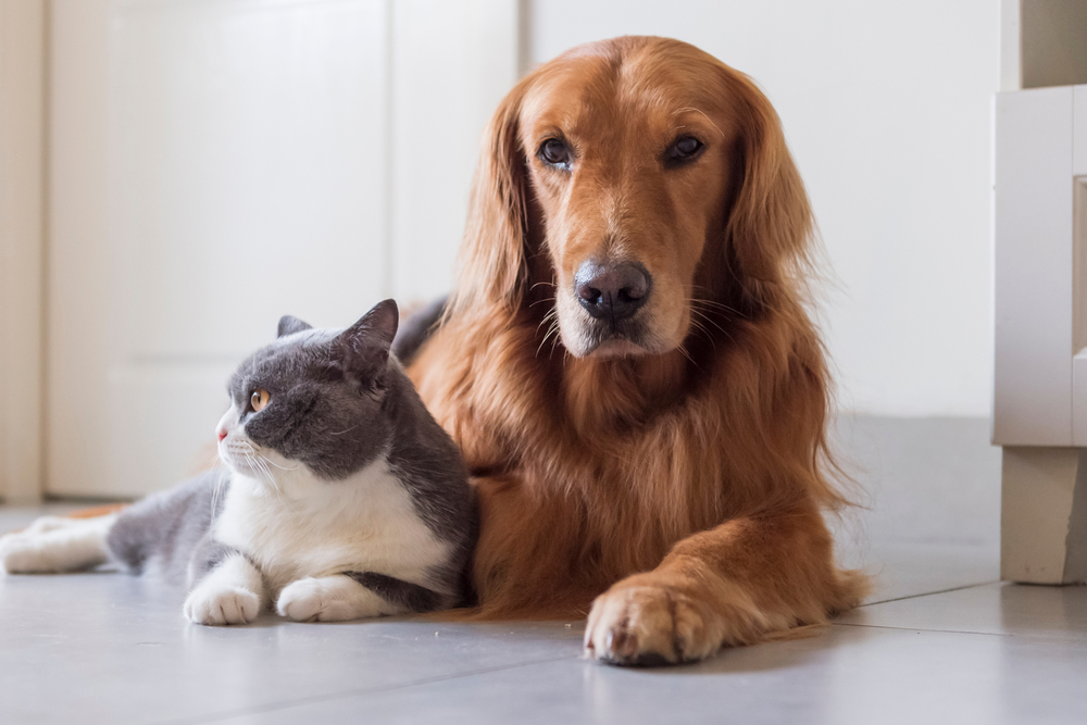Medterra CBD for Pets Review: Helping Keep Our Furry Companions Happy and Healthy