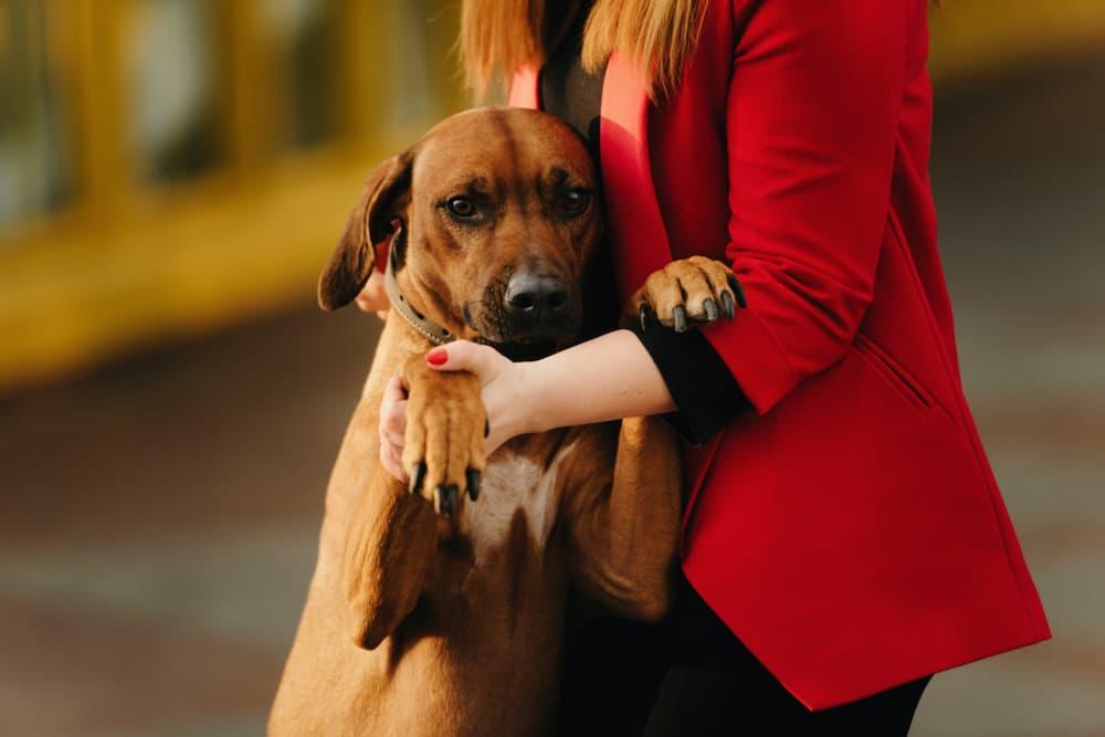 Owner with her Rhodesian Ridgeback dog