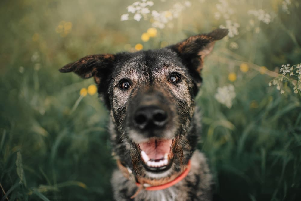 Best Senior Dog Food of 2021