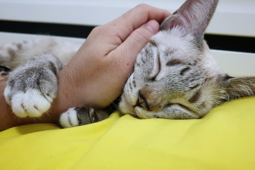 Cat being clingy on owners arms