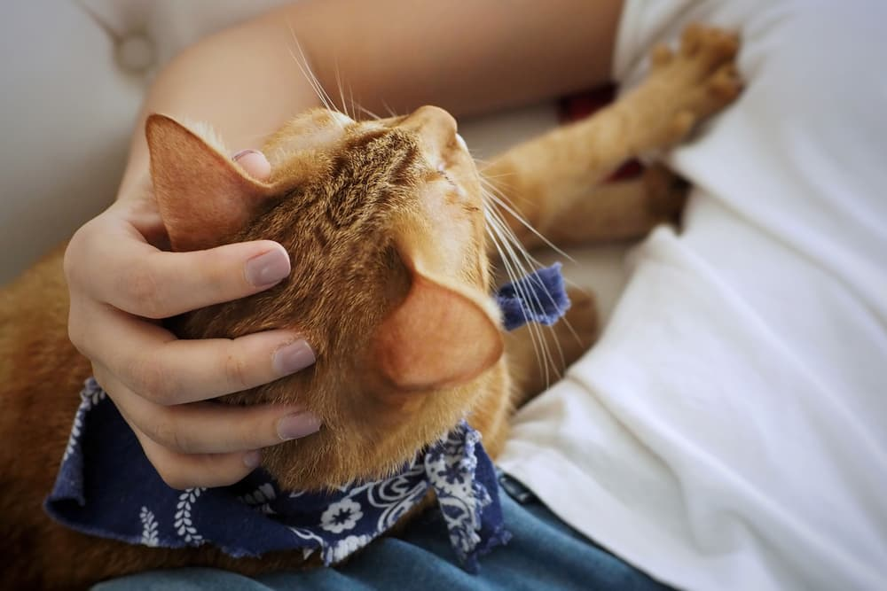 Cat stretching into owner looking for attention acting very clingy