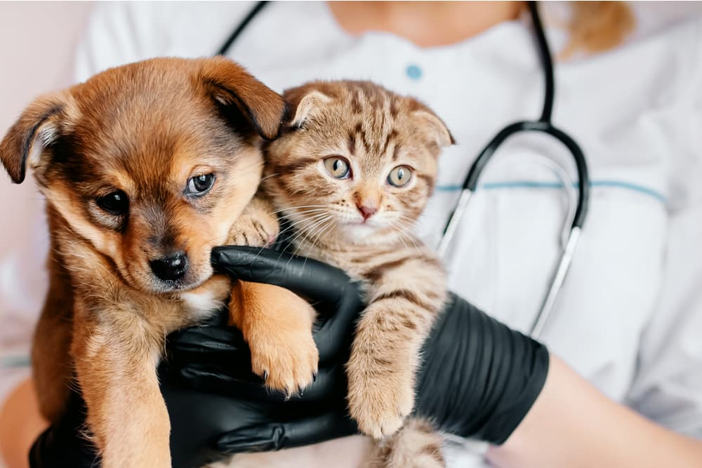 Cat and dog at the vet