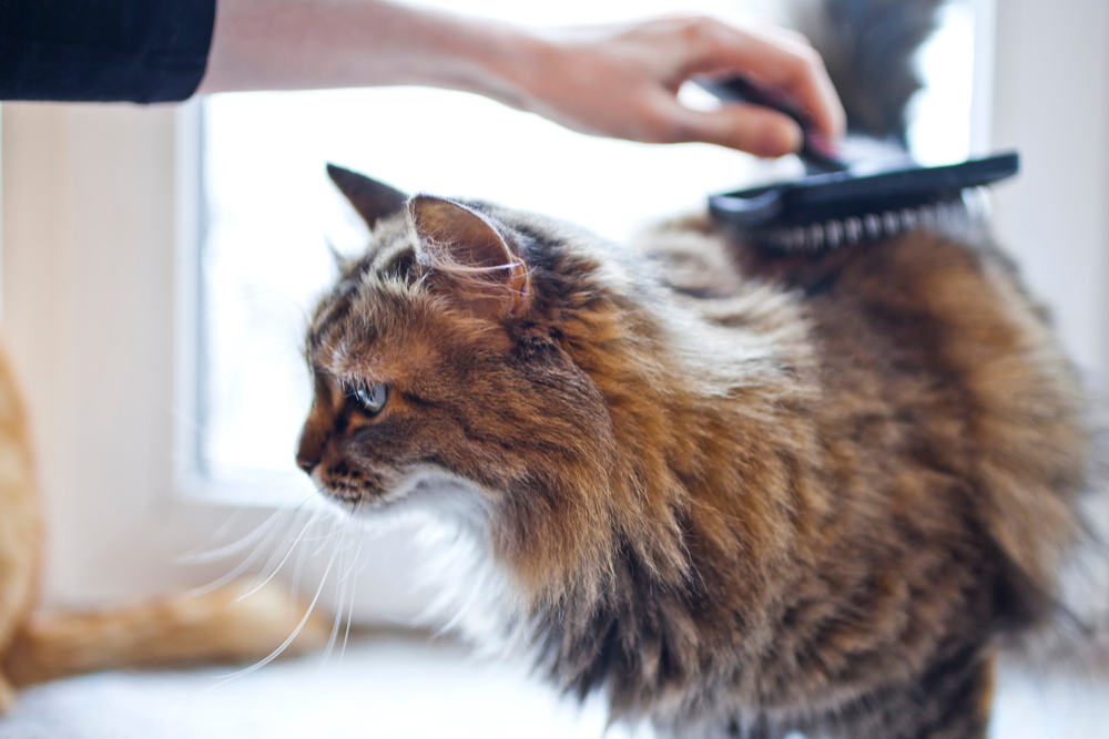 Cat being brushed by owner to prevent matted cat hair