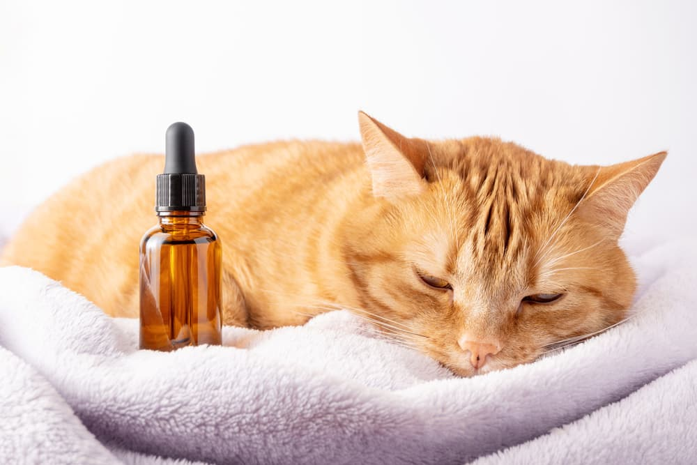 Cat laying down with CBD drops