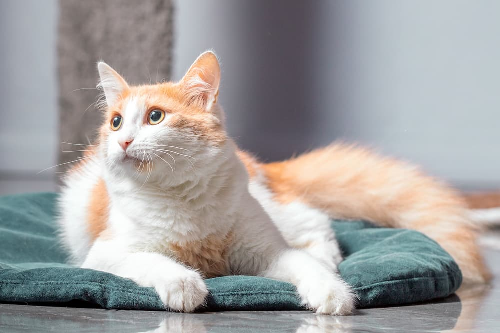 Matted Cat Hair: How to Handle It