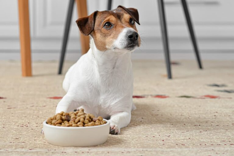 Dog looking up to owner with food bowl