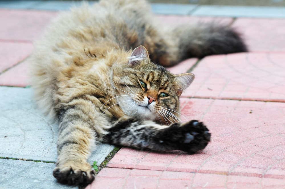 Cat stretching outside on a patio