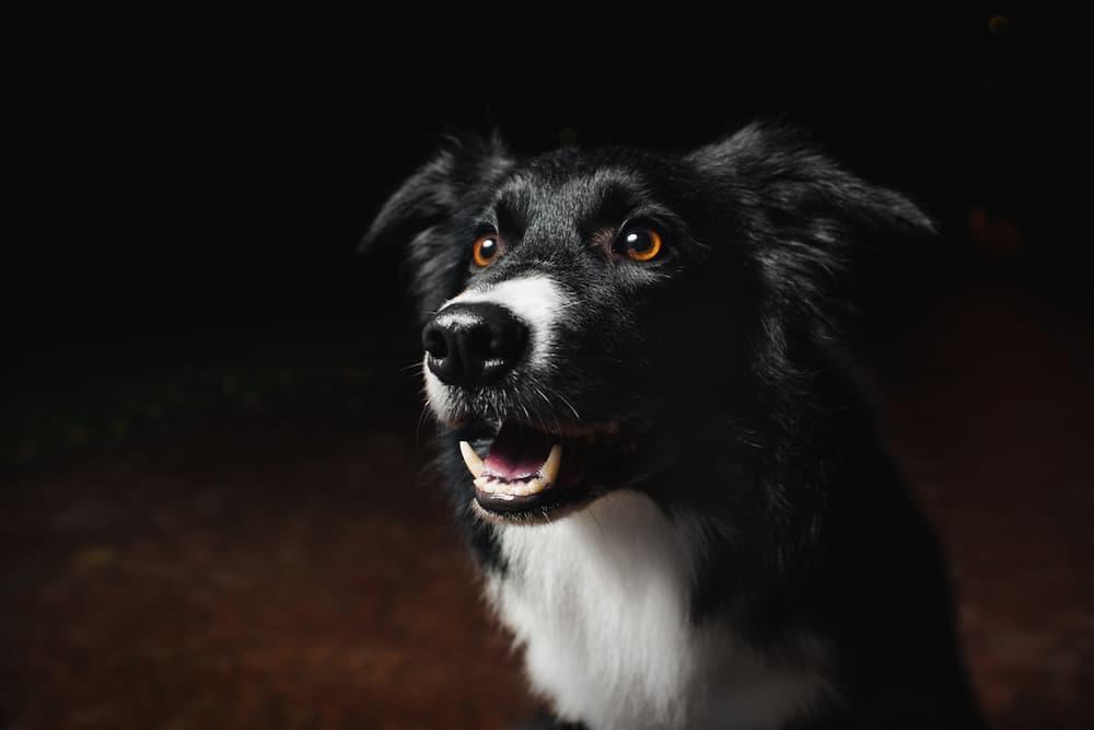 Dog sitting outdoors at night