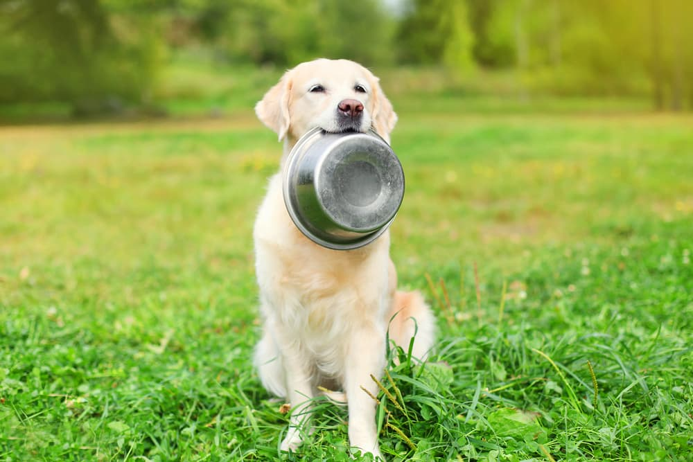 Dog outdoors holding up his bowl