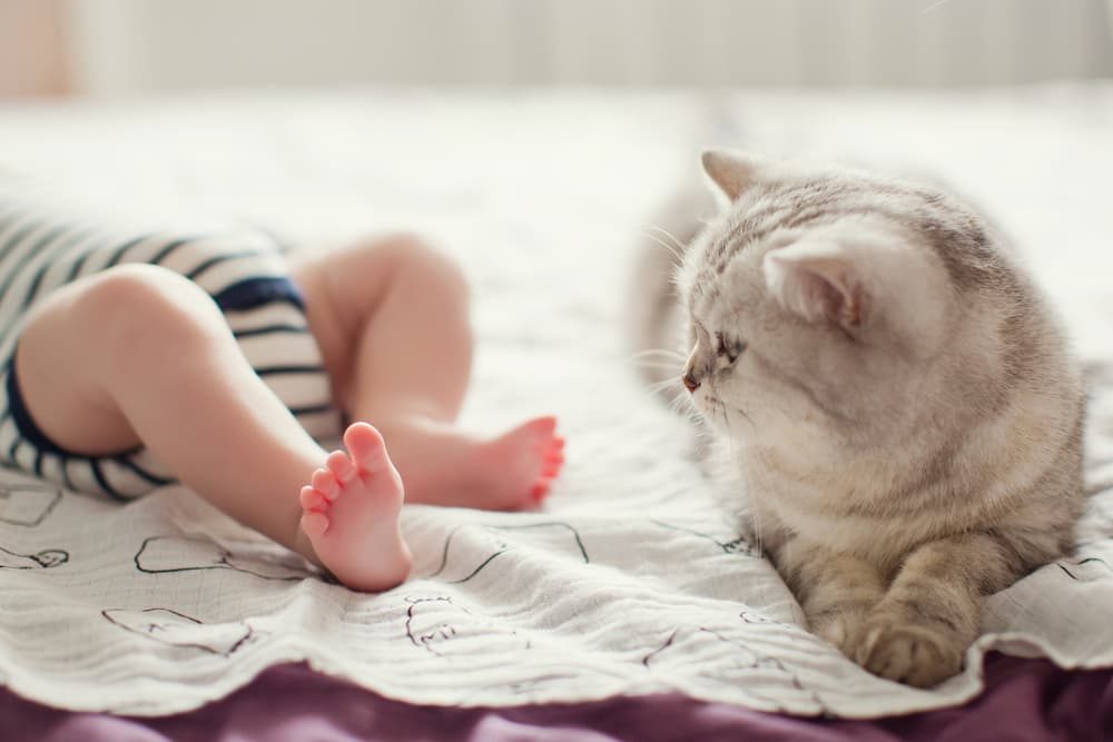 Cat laying next to a baby's feet