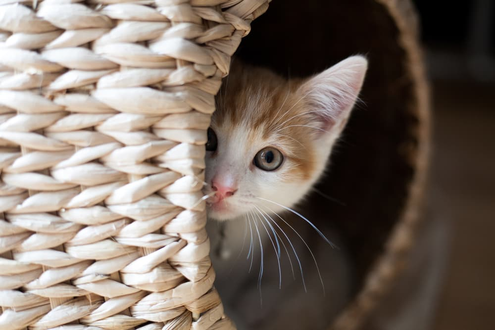 Cat hiding in wicker basket at home