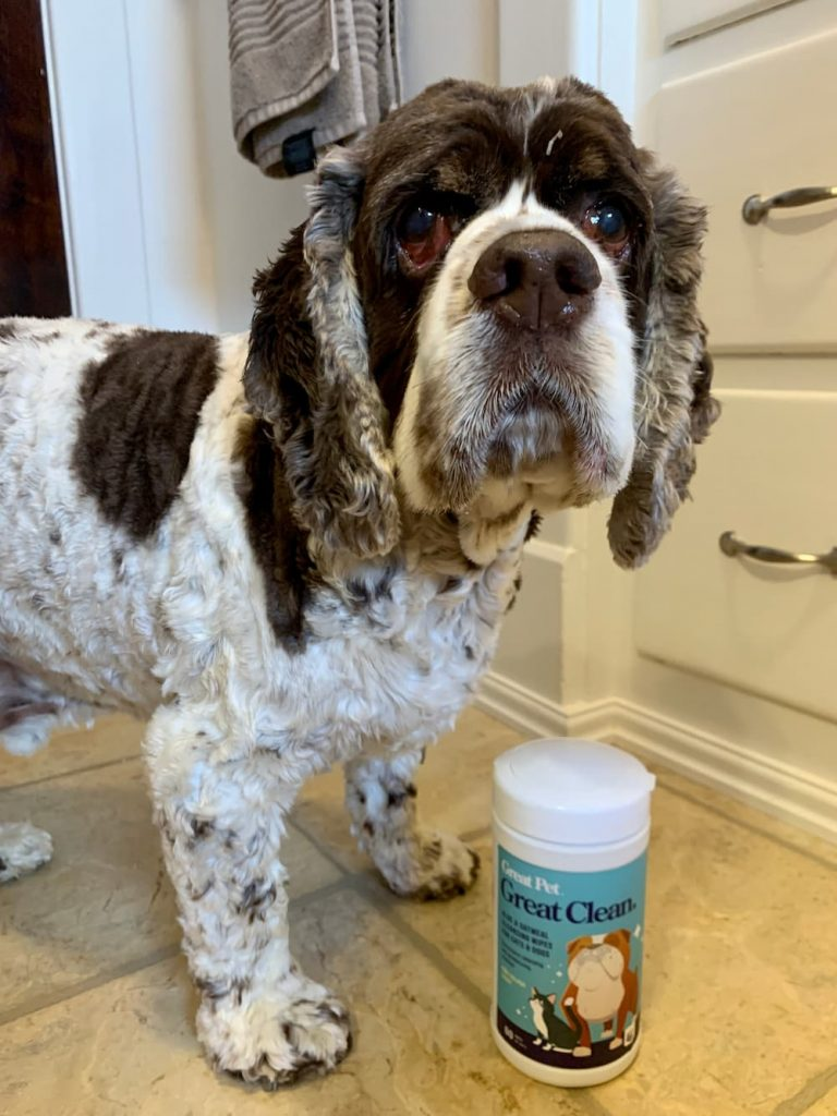 Cocker Spaniel with Great Clean wipes