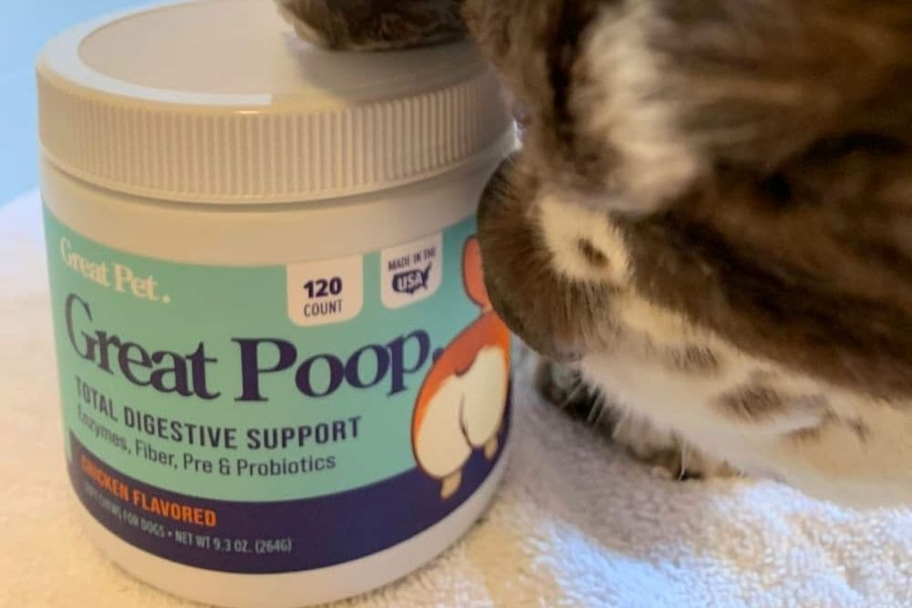 Probiotic Chews for Dogs: A Closer Look at Great Poop Digestive Support Supplement