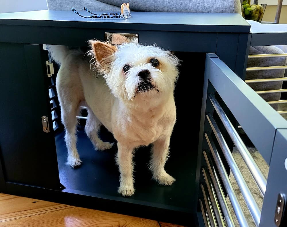 Moderno Dog Crate Review: Where Fashion Meets Function