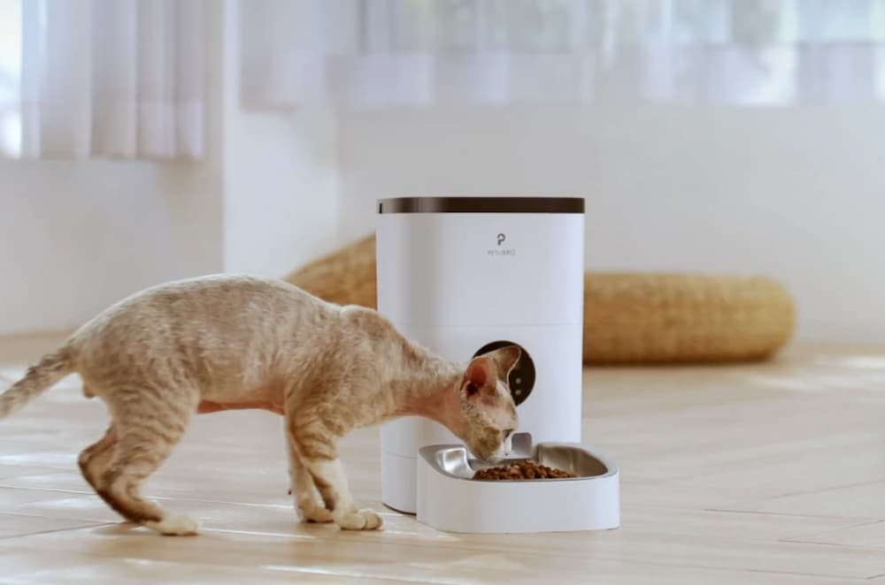Petlibro cat eating from auto feeder