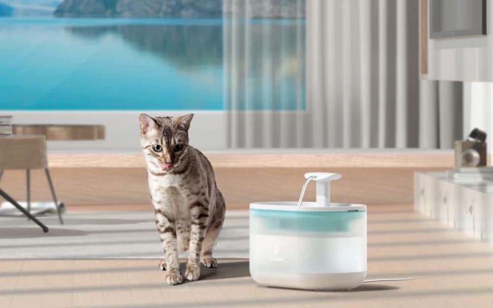 Petlibro water fountain next to cat at home