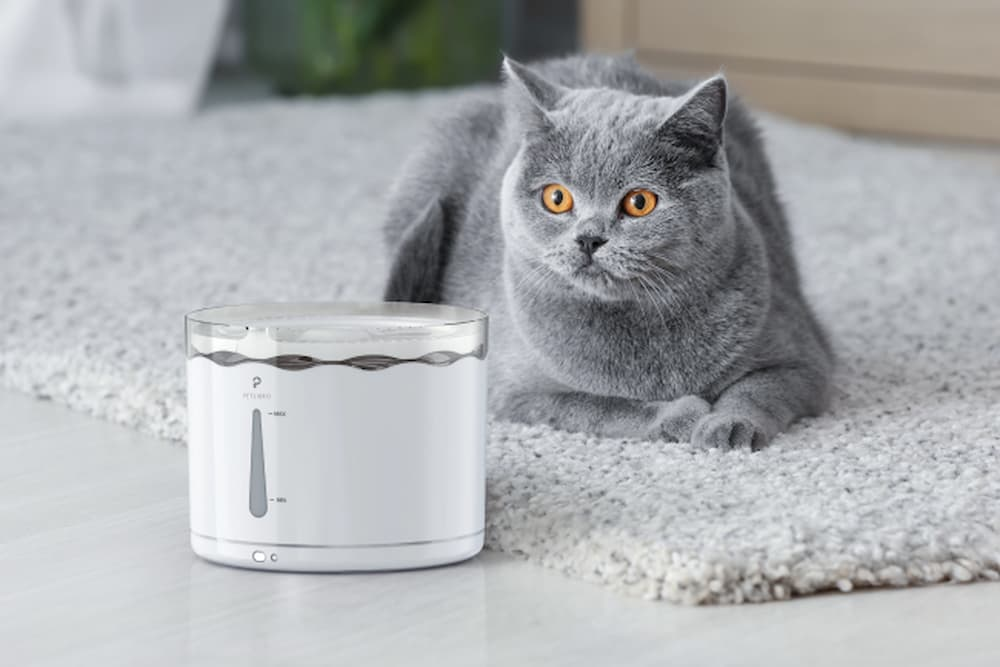 Petlibro cat with auto water fountain