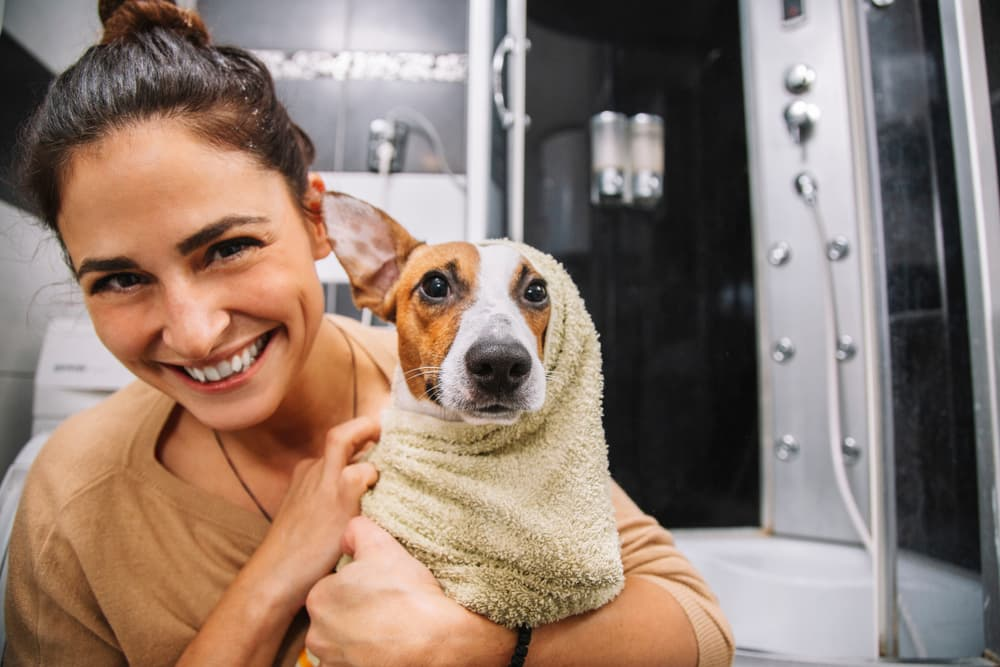 Jack russell terrier dog having a bath and using products with neem oil for dogs
