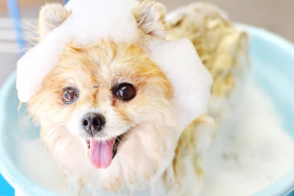 Best Dog Shampoo: 8 Great Options for Every Coat Type