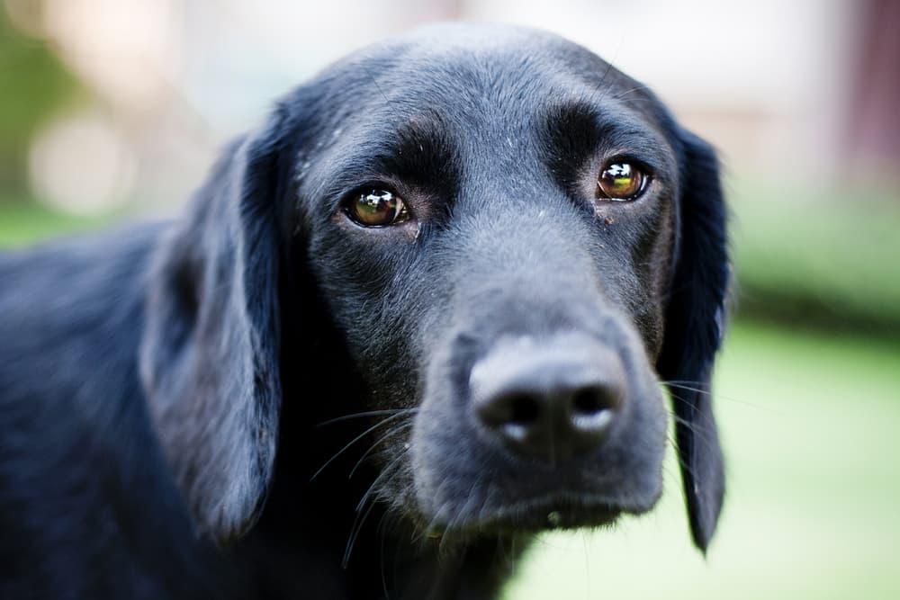Dog looking sad outdoors