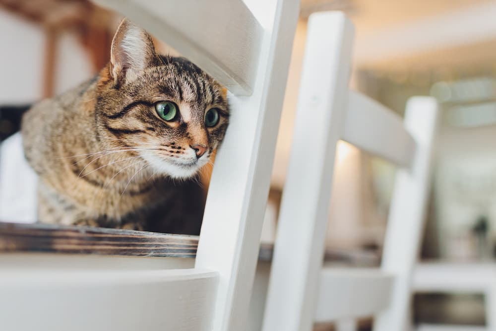 Kitten laying on a kitchen chair