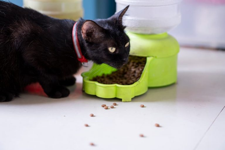 Cat eating from an automatic pet feeder