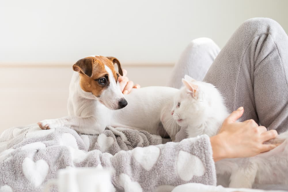 Owner sleeping in with cat and dog at home