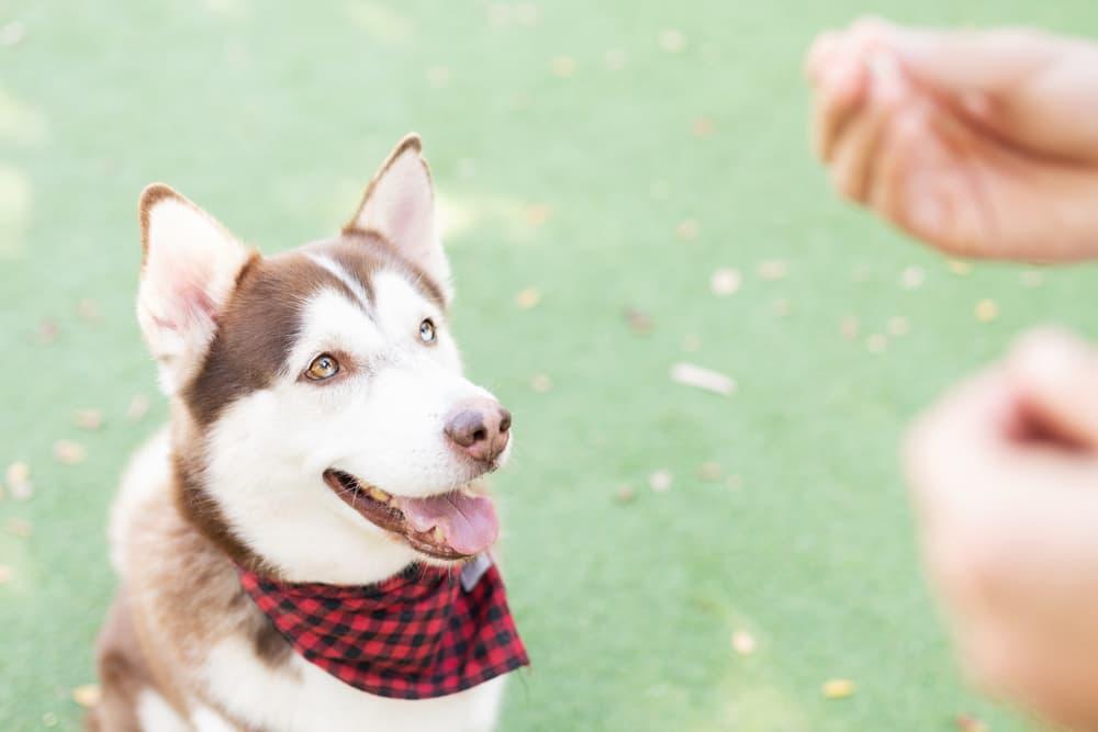 6 Best Dehydrated Dog Treats