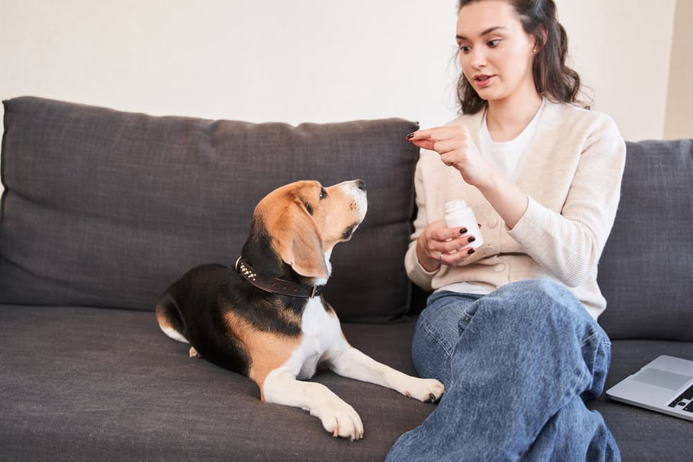 Woman with dog vitamin bottle giving dog vitamins on couch
