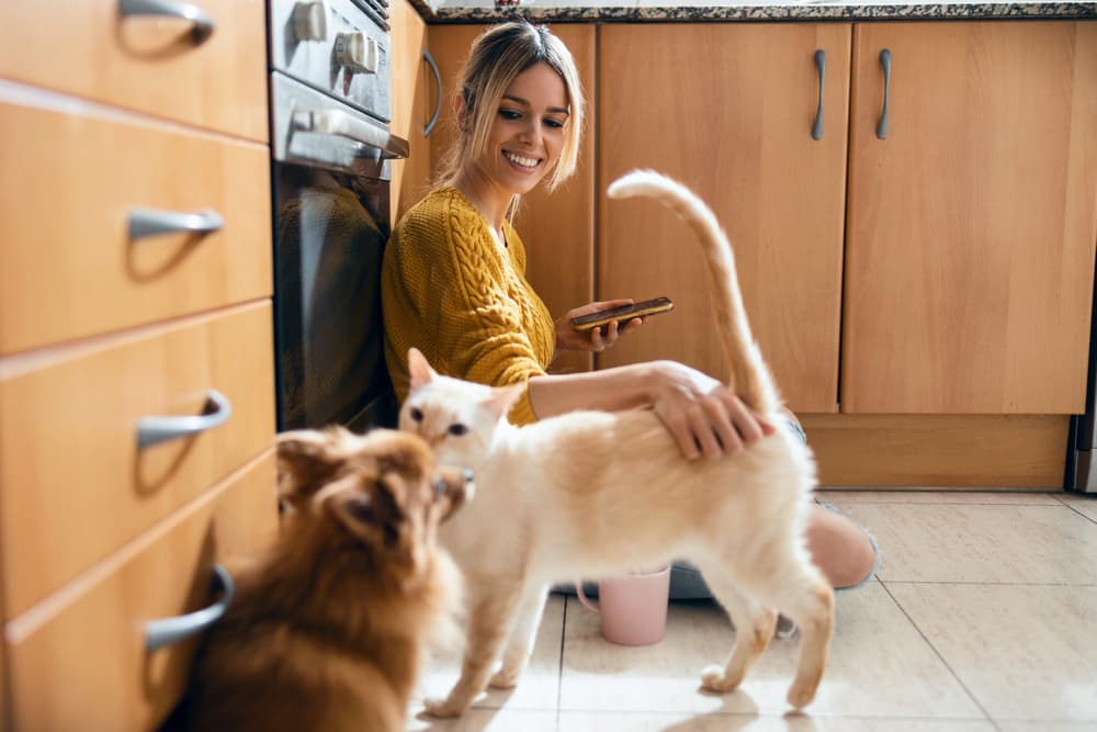 woman using her smart phone while stroking her cute lovely cat sitting on the floor in the kitchen at home