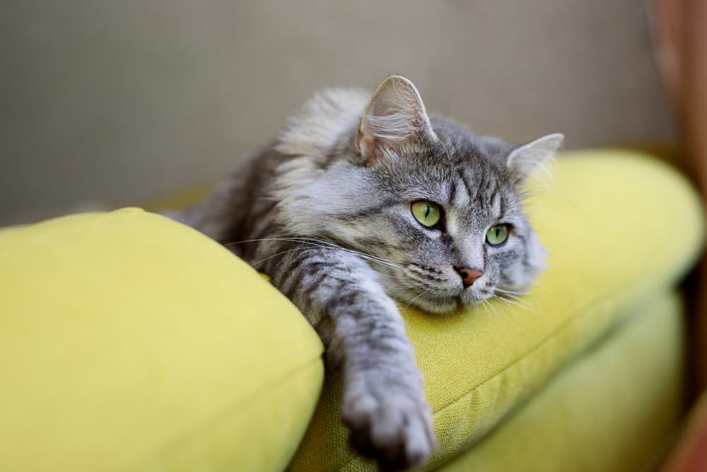 Cat looking sad on top of a couch