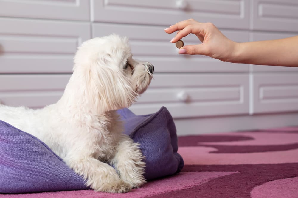 Dog getting medicine from owner's hand