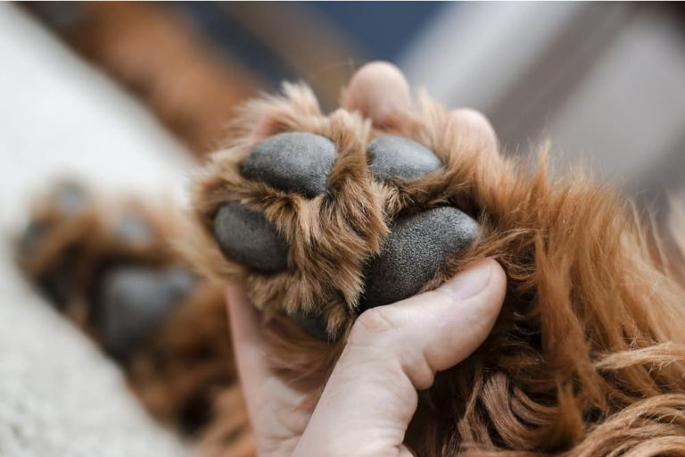 close up of owner holding dog's paw