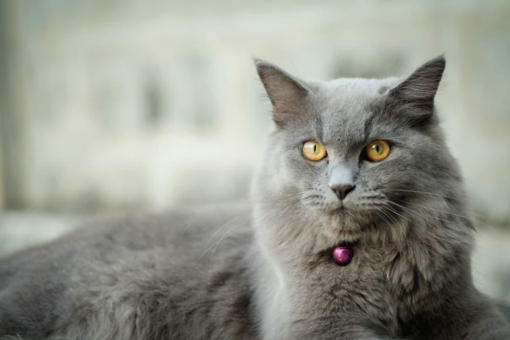 Cat sitting in an outdoor garden