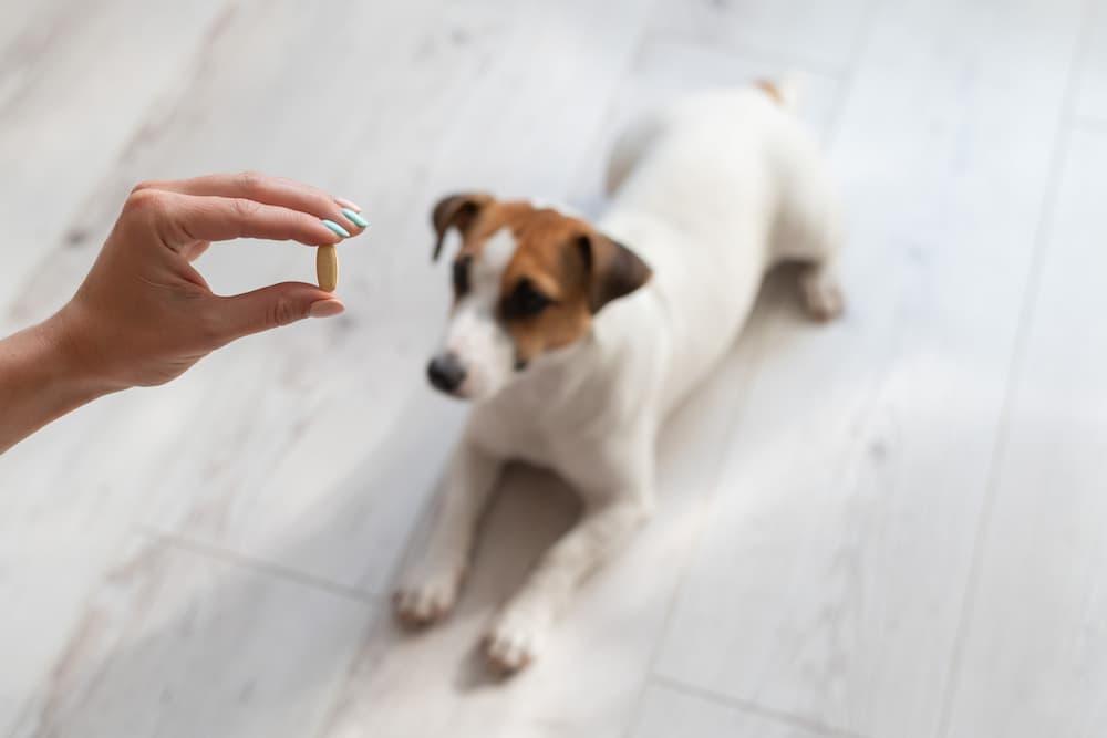 Dog Vitamins: Are They Necessary?