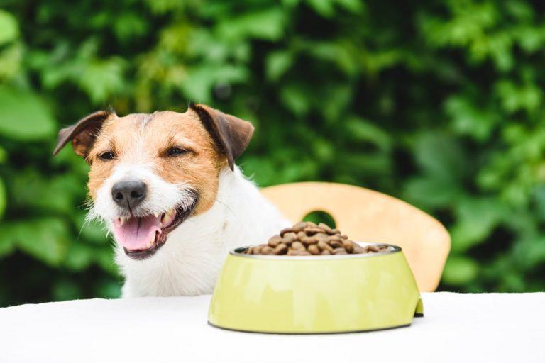 Dog smiling next to a full dog food bowl