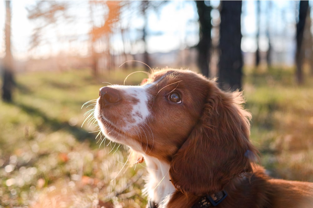 Dog looking up in a forest