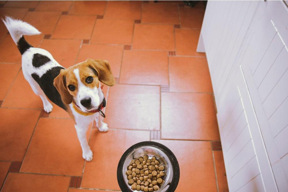 Dog with dog food bowl
