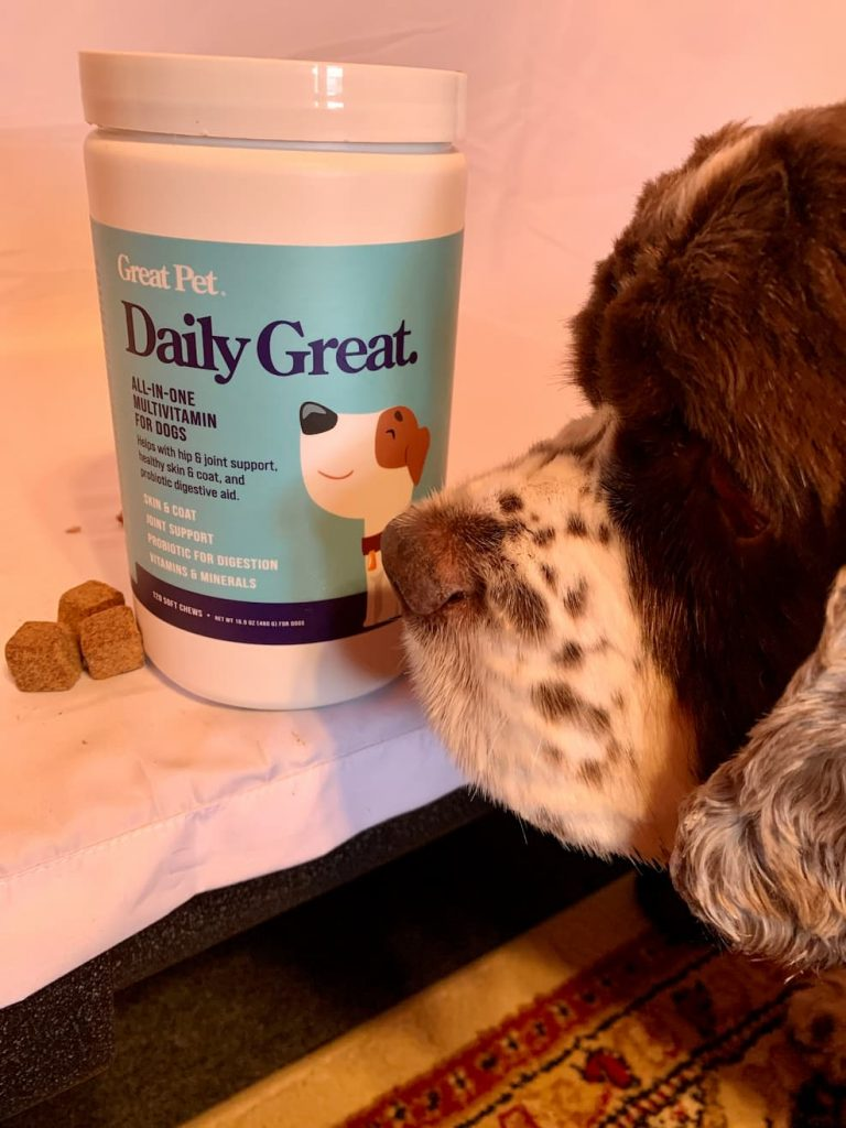 Dog sniffing Daily Great