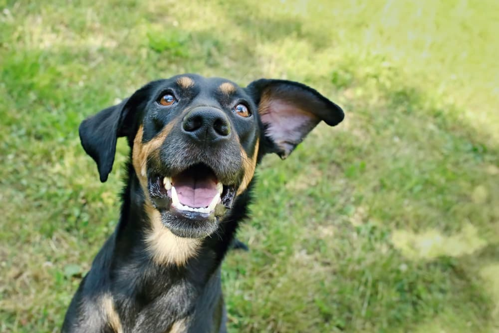Vitamin E for Dogs: Benefits and Uses