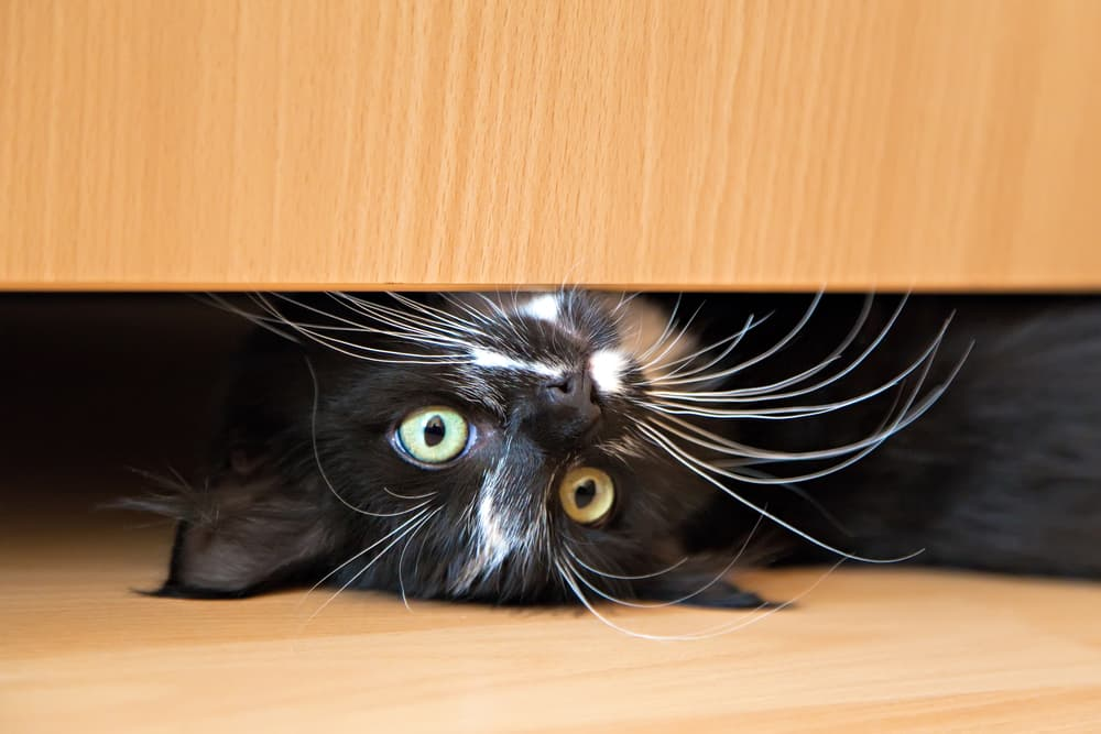 Black cat upside down underneath a bed