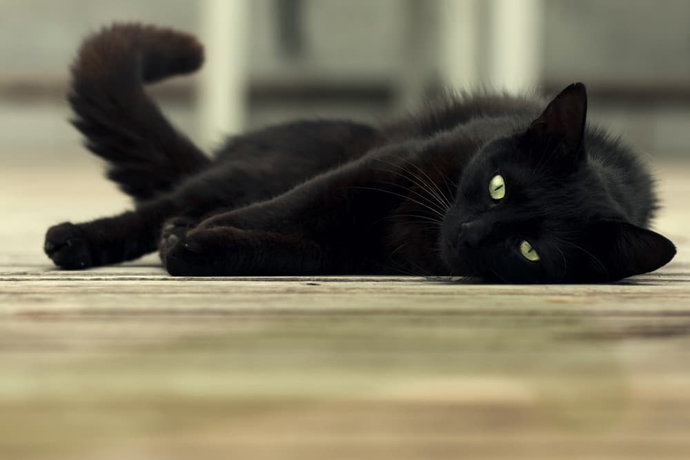 Cat laying down in a kitchen on the floor