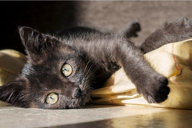 Cute black cat laying in the sun