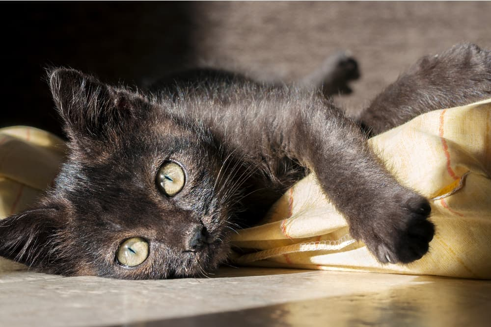 134 Names for Black Cats