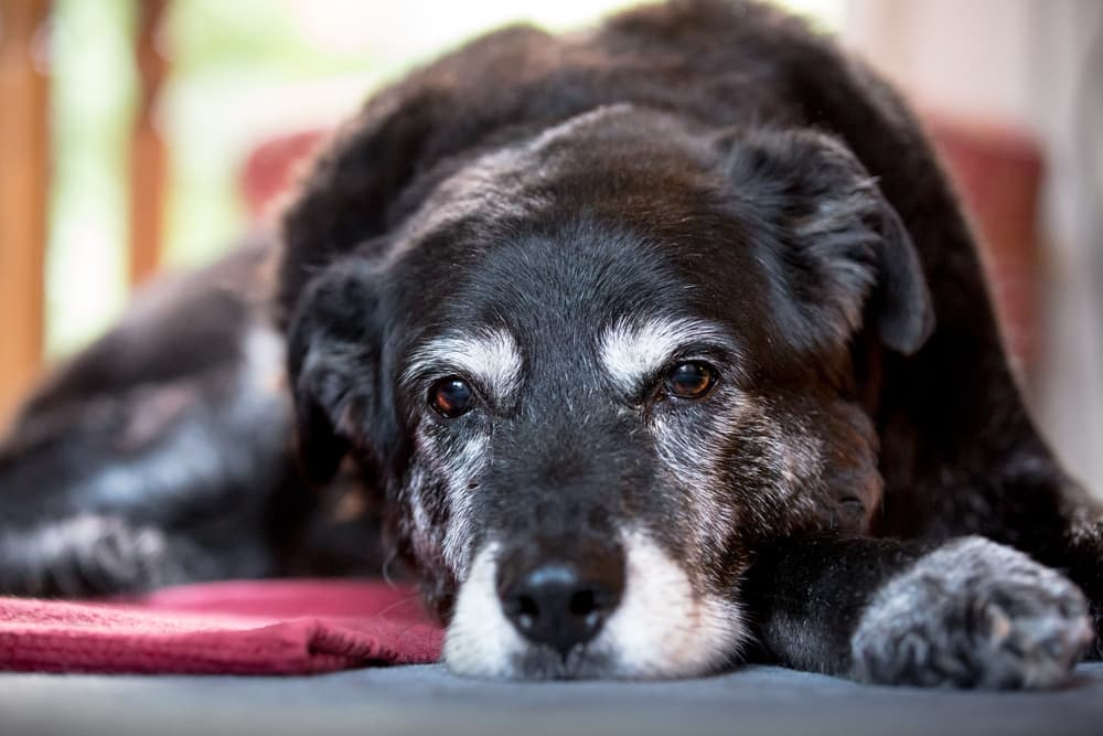 Why Is My Older Dog Having Accidents?