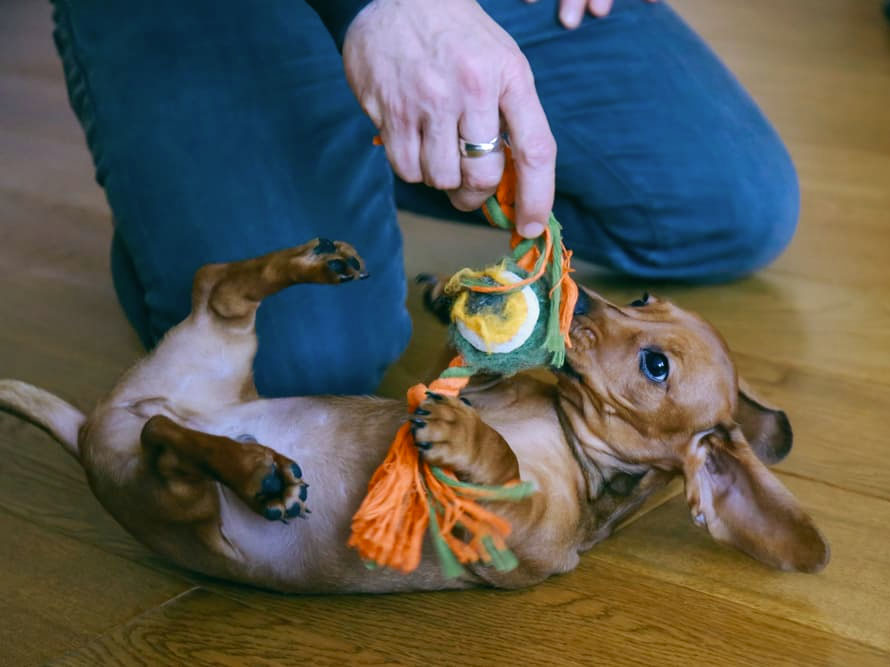 Four Proven Methods to Help Your Dog Fear Bust