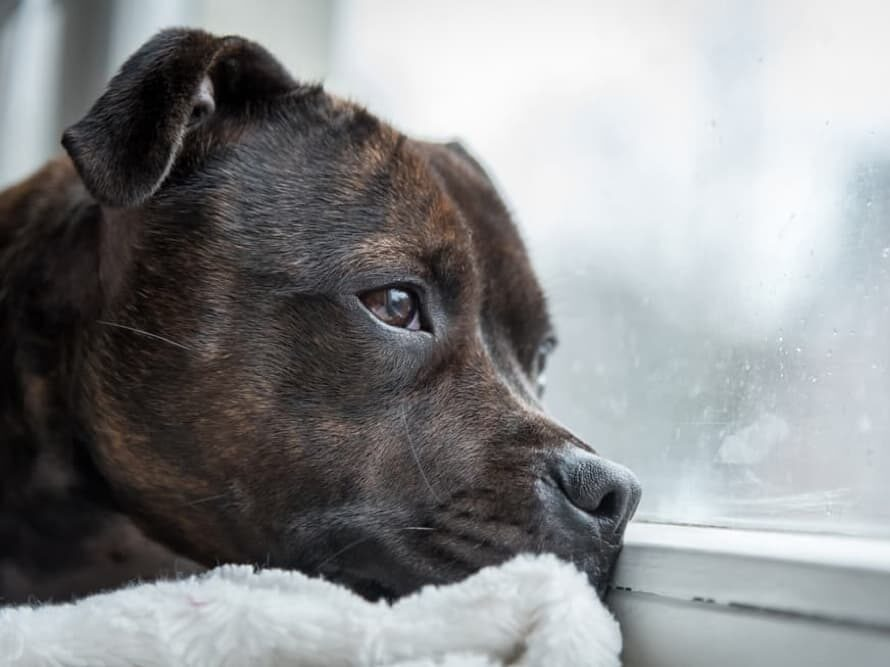 How Bad Can Separation Anxiety Get?