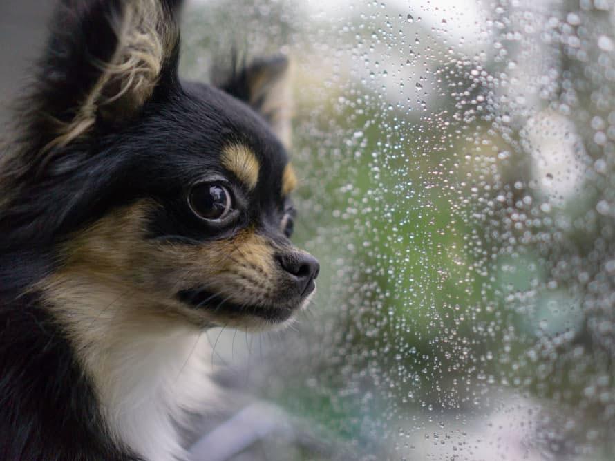 Why Is My Dog Afraid of Thunder?