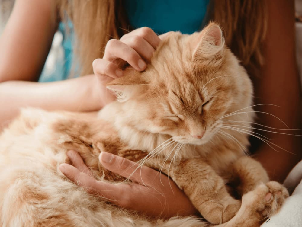 Do Cats Like to Be Alone?
