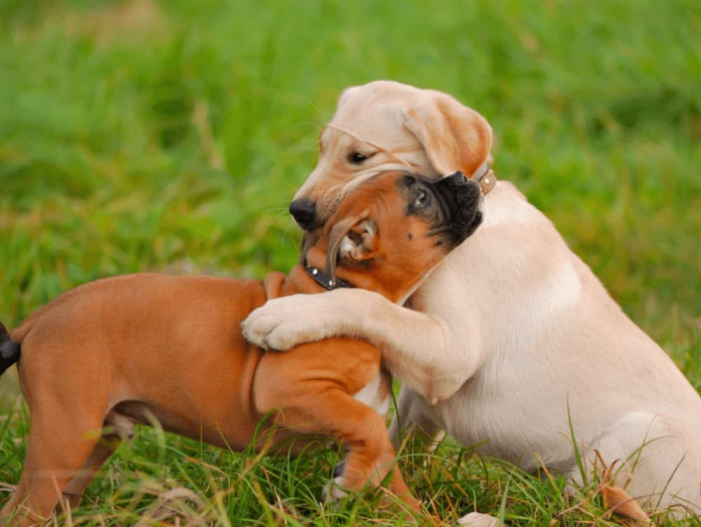 Puppy Socialization 101: Stopping Fear Before It Starts